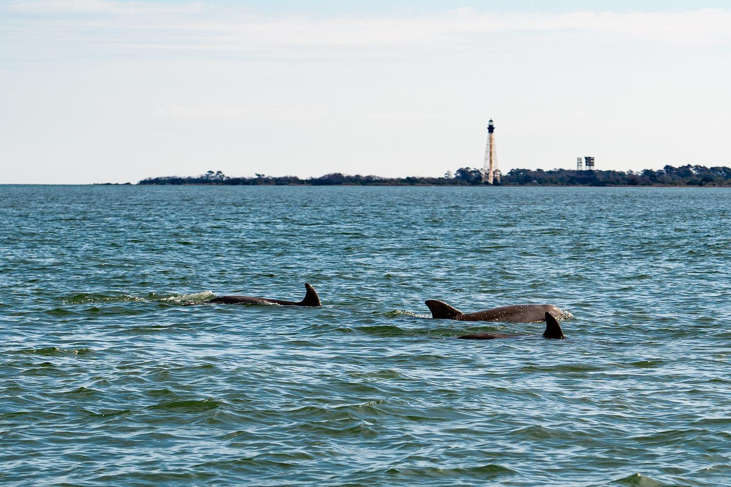 dolphins in Cape Charles
