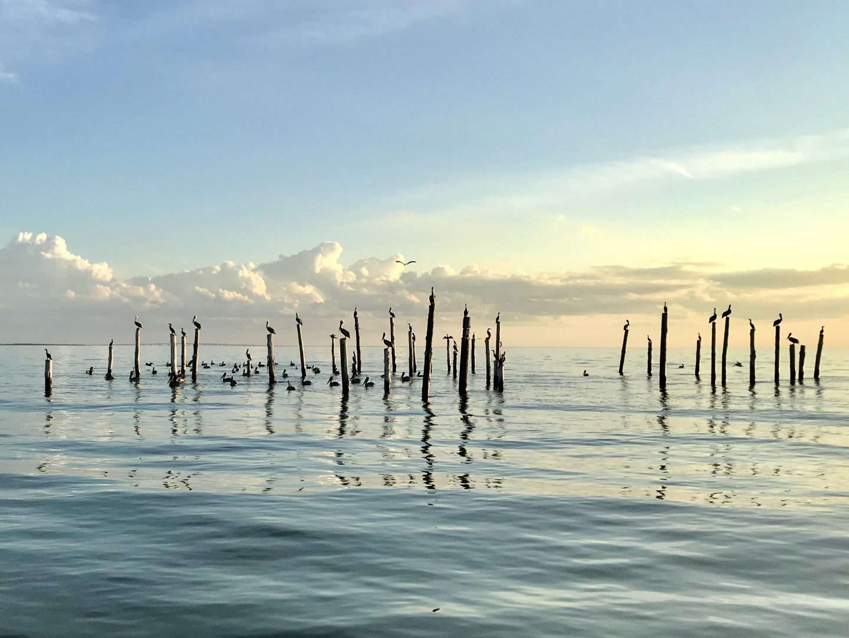 Chesapeake Bay scene
